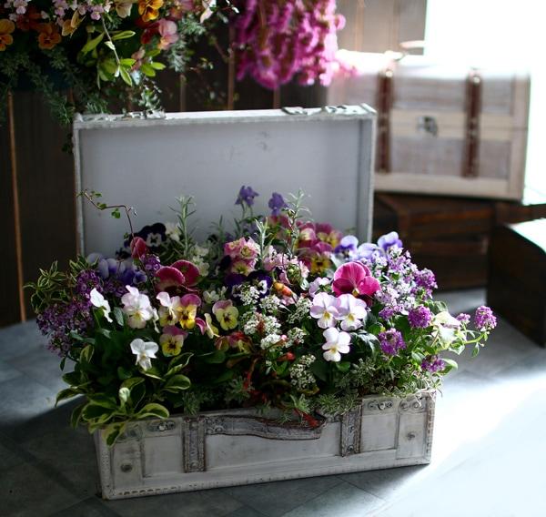 【数量限定】【送料無料】「おまかせプレミア寄せ植え in トレジャーBOX〜Lサイズ〜」精巧な作りのアンティークBOXに季節の花苗をアレンジ