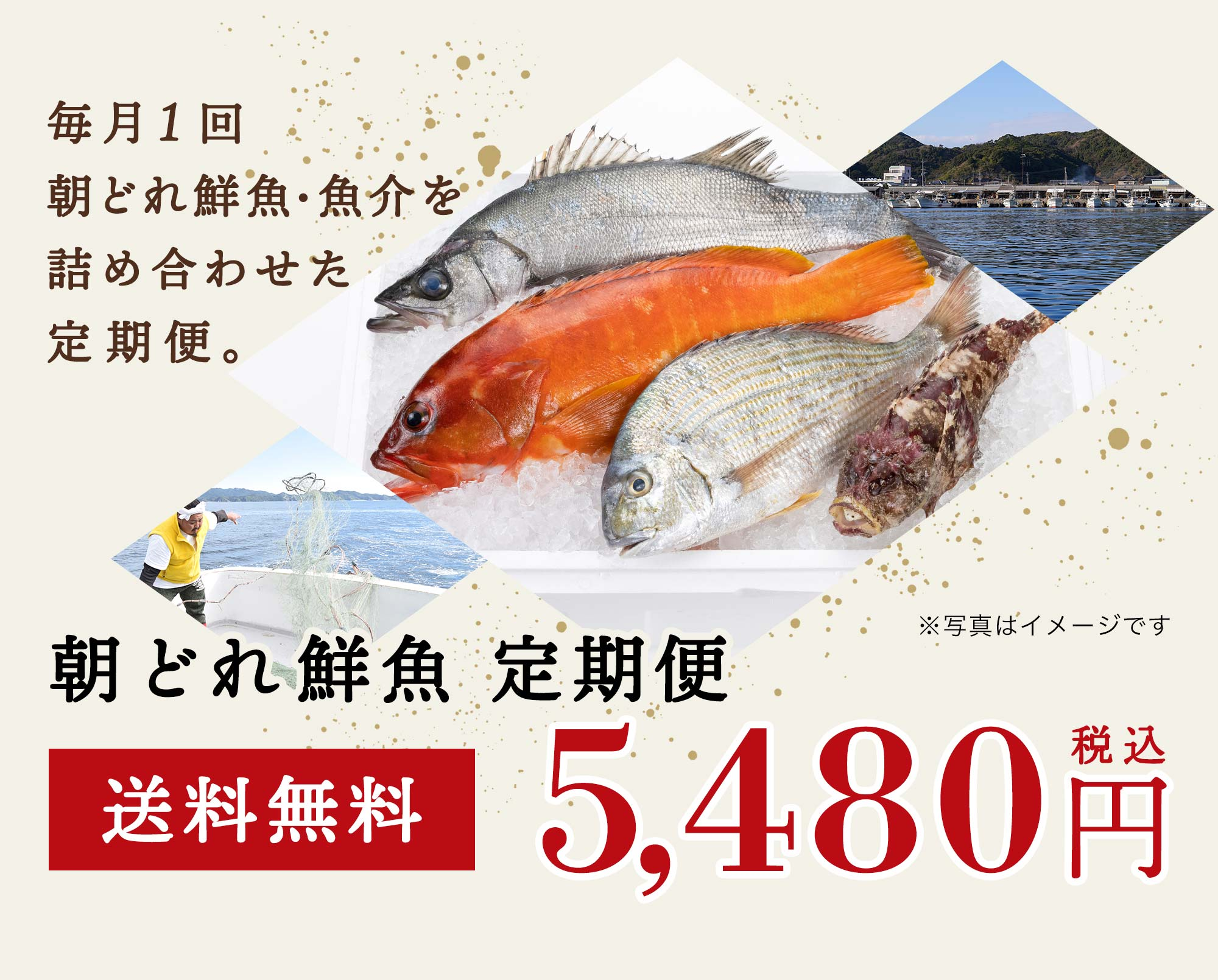 毎月1回、朝どれ鮮魚・魚介を詰め合わせた定期便・朝どれ鮮魚定期便送料無料5480円税込
