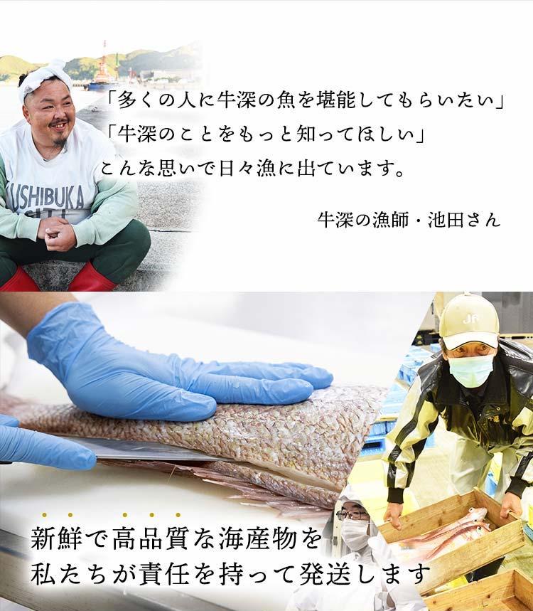 牛深の漁師・池田さん「多くの人に牛深の魚を堪能してもらいたい」「牛深のことをもっと知ってほしい」こんな思い出日々漁に出ています。新鮮で高品質な海産物を私たちが責任を持って発送します