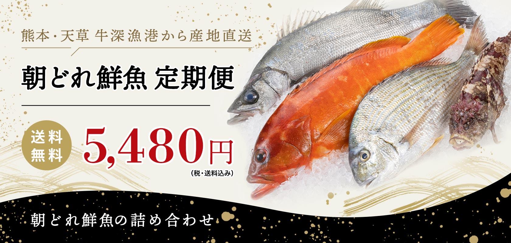 朝どれ鮮魚定期便