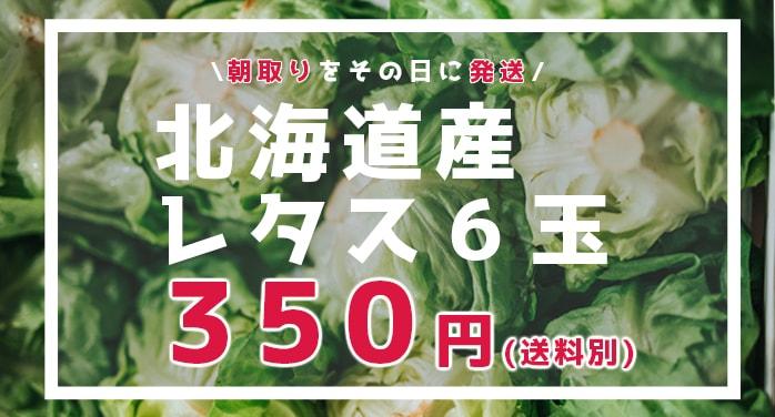 【期間限定】格安北海道北広島産レタス