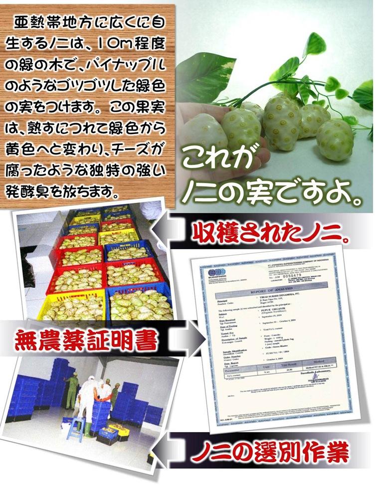 ハブの女王!奇跡のフルーツノニ。無農薬ヤエヤマアオキ100%のノニジュースを自社ブランドで沖縄からお届けいたします。