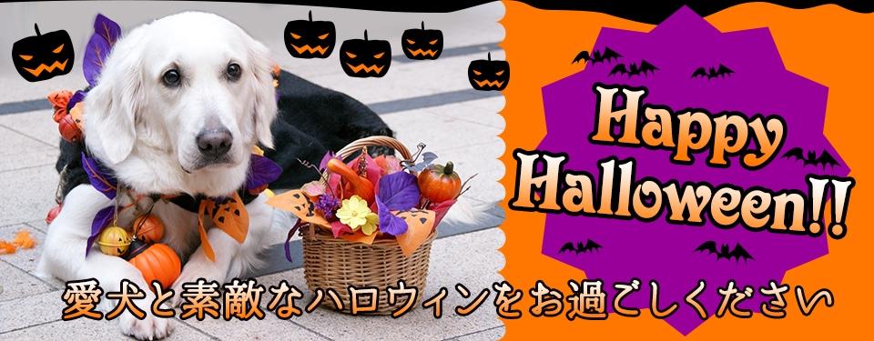 Happy Halloween!!愛犬と素敵なハロウィンをお過ごしください
