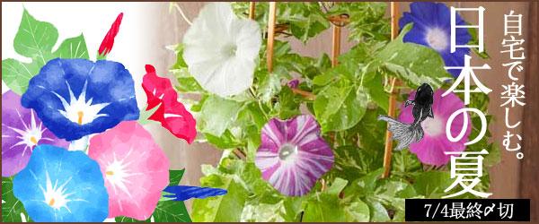 お花・植物