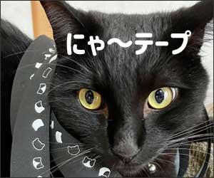 ポケマル にゃーテープ 猫 肉球