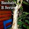 バオバブ大型盆栽