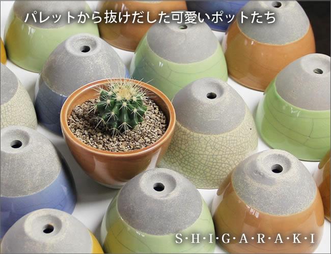 山草鉢 陶器山野草鉢 しがらきやき植木鉢 サボテン鉢