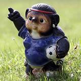 サッカー狸(メス)