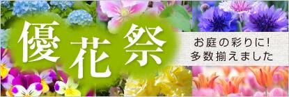 お庭の彩りに!優花祭り