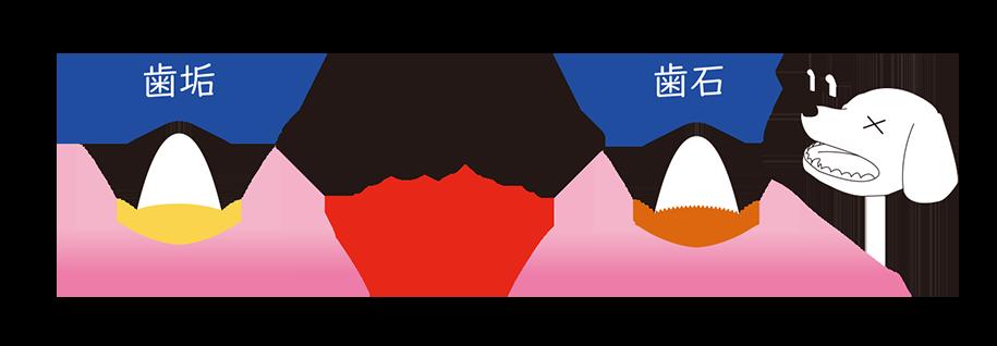 MISOKA for Dog 歯周病豆知識