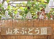 山本観光ぶどう園