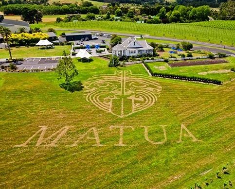 matua winery2