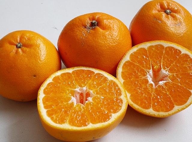 【2月下旬の柑橘】「はるみ&ネーブルオレンジ」各2�